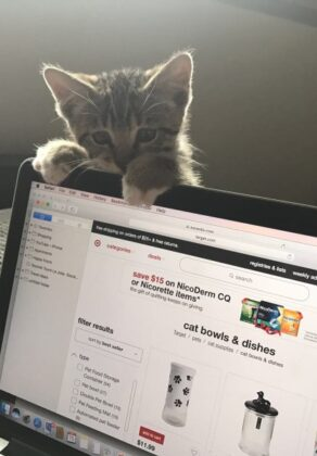 buy-them-all-i-am-very-cute-and-deserve-the-best-kitten-hanging-on-to-a-computer-screen-while-his_t20_8B6EYJ